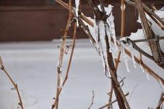 Eiszapfen auf einer Rebtraube lizenzfreie stockfotos