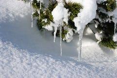 Eiszapfen auf Fichte Stockbild