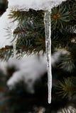 Eiszapfen auf Fichte Stockbilder