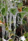 Eiszapfen auf grünen Blättern Lizenzfreie Stockbilder