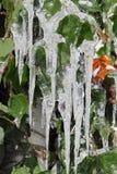 Eiszapfen auf grünen Blättern Lizenzfreie Stockfotos