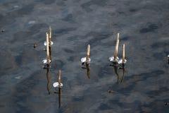 Eiszapfen auf See Stockfotos