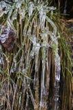 Eiszapfen bedecken einen Rasen Lizenzfreies Stockbild