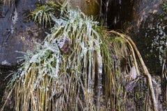 Eiszapfen bedecken einen Rasen Lizenzfreie Stockfotografie
