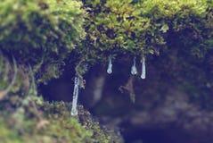 Eiszapfen lizenzfreies stockfoto