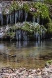 Eiszapfen tief im Wald Lizenzfreie Stockbilder