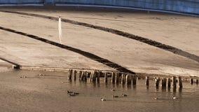 Eiszapfen und Enten unter der Brücke Stockfotografie