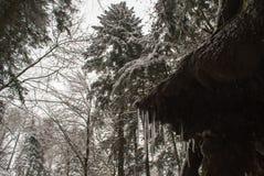 Eiszapfen und frischer Schnee in einem Wald mit hohen Bäumen in der Schweiz stockbild