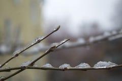 Eiszapfen und Schnee auf einem Baumast lizenzfreie stockbilder