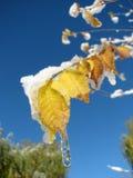 Eiszapfen und Schnee auf einem Blatt Stockfotos