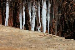 Eiszapfen und Treibholz Lizenzfreies Stockfoto
