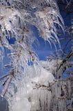 Eiszapfen von einem Baum Stockfotos