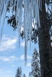 Eiszapfen, Wald Stockfoto