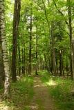 Eiszeit-Spur - tiefes Holz teilt sonnigen Tag des Spätfrühlings ein lizenzfreie stockbilder