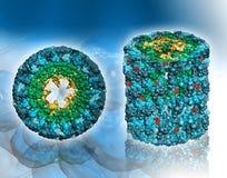 """Eiwitmolecule†""""hemocyanin-Hoogste en vooraanzicht royalty-vrije illustratie"""