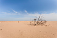 Ejected sea wave on the sand beach tree. Yellow sand and blue sky. Wide angle. Royalty Free Stock Images