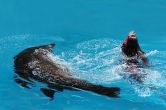 Ejecución con el león de mar - USO EDITORIAL Imagenes de archivo
