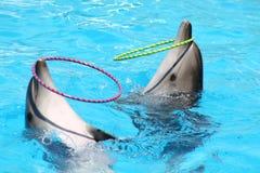 Ejecución de delfínes Imágenes de archivo libres de regalías