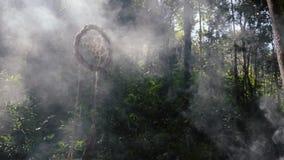 Ejecución de Dreamcathers en un árbol en un bosque místico metrajes