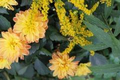 Ejecución de la abeja en floral fotos de archivo libres de regalías
