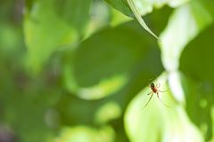 Ejecución de la araña en un Web Fotos de archivo libres de regalías