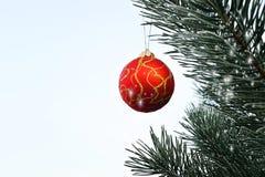 Ejecución de la bola de la Navidad en un árbol de pino en el bosque Fotografía de archivo