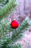 Ejecución de la bola del ` s del Año Nuevo en una rama de un árbol de navidad en el bosque Imagen de archivo