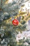 Ejecución de la bola del ` s del Año Nuevo en una rama de un árbol de navidad en el bosque Imágenes de archivo libres de regalías