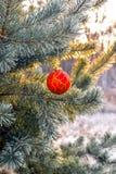 Ejecución de la bola del ` s del Año Nuevo en una rama de un árbol de navidad en el bosque Fotos de archivo libres de regalías