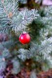 Ejecución de la bola del ` s del Año Nuevo en una rama de un árbol de navidad en el bosque Foto de archivo libre de regalías