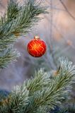 Ejecución de la bola del ` s del Año Nuevo en una rama de un árbol de navidad en el bosque Fotografía de archivo libre de regalías