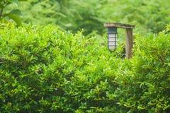 Ejecución de la lámpara del vintage en los carriles de madera en el jardín al aire libre rodeado con los árboles verdes Fotografía de archivo libre de regalías