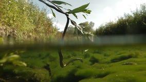 Ejecución de la serpiente de las ramas almacen de metraje de vídeo