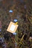Ejecución de la tarjeta en blanco en la achicoria de la flor Fotografía de archivo