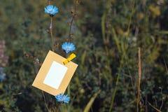Ejecución de la tarjeta en blanco en la achicoria de la flor Fotos de archivo