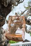 Ejecución de madera de la jaula de pájaros en árbol Foto de archivo libre de regalías