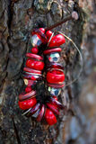 Ejecución de piedra roja de la pulsera en el árbol fotografía de archivo