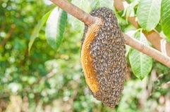 Ejecución del enjambre de la abeja Fotografía de archivo libre de regalías