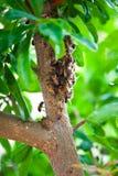 Ejecución del enjambre de la abeja en una rama Fotografía de archivo