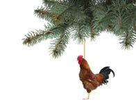 Ejecución del gallo del fuego rojo en el árbol de navidad Foto de archivo libre de regalías