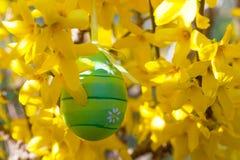 Ejecución del huevo de Pascua en una rama con las flores amarillas Imagen de archivo