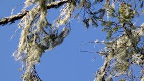 Ejecución del musgo en un árbol almacen de video