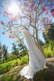Ejecución del vestido de boda en un árbol Imagen de archivo