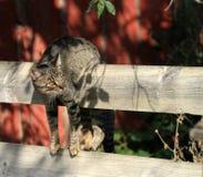 Ejecución divertida del gato en la cerca Imagenes de archivo