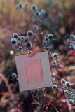 Ejecución en blanco del marco en feverweed Foto de archivo libre de regalías