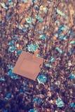 Ejecución en blanco del marco en la achicoria de las flores al aire libre Fotos de archivo libres de regalías