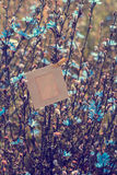Ejecución en blanco del marco en la achicoria de las flores al aire libre Imagenes de archivo