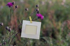 Ejecución en blanco del marco en las flores rosadas al aire libre Fotografía de archivo