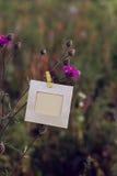 Ejecución en blanco del marco en las flores rosadas al aire libre Imagenes de archivo