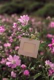 Ejecución en blanco del marco en las flores rosadas al aire libre Imágenes de archivo libres de regalías